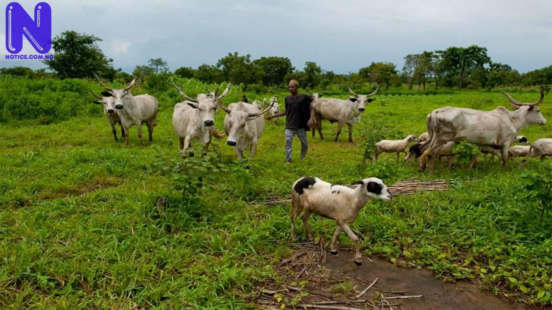 Bandits also attack Fulanis – Miyetti Allah - Insecurity GRAZING-FULANI