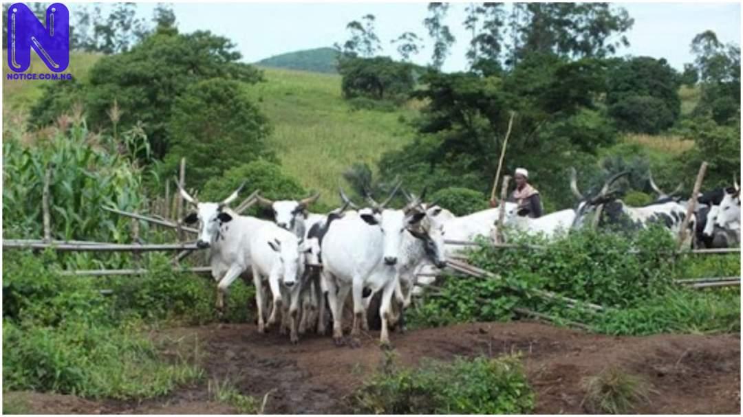 Nigeria's herder-farmer conflict could escalate if NLTP fails – ICG HERDER-FARMER