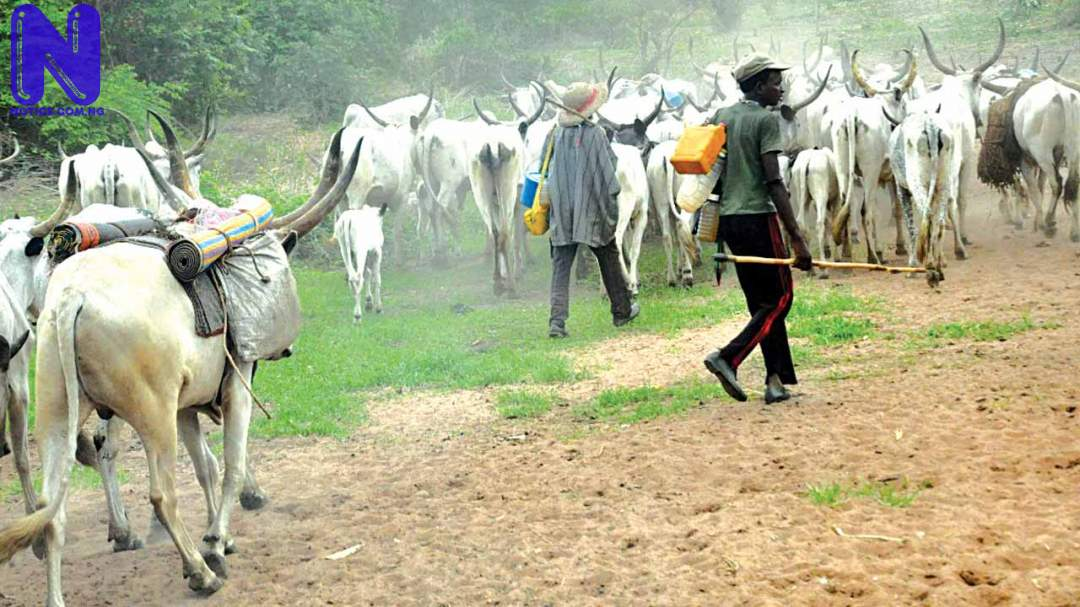 Herdsmen flee Delta community as thunder strike kills 12 cows HERDSMEN-13-11-16