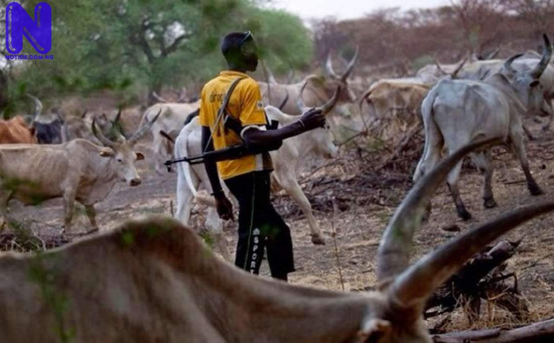 FCTA bans rearing of cows, other livestock in Abuja residential areas HERDSMEN