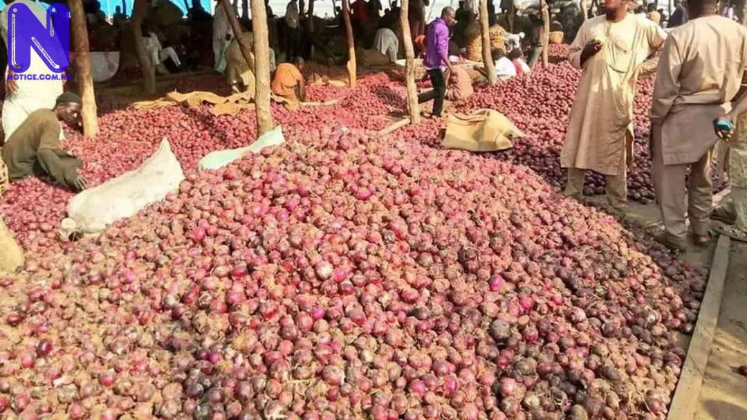 Farmers lament as Onions rotten in North over blockage of supply to South ONION