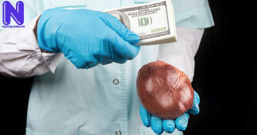 Reps move to probe organ trafficking value chain ORGAN-TRAFFICKING
