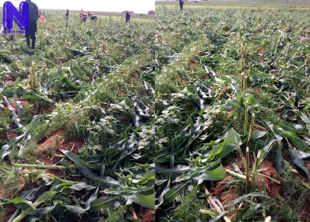 Destruction of farms callous, criminal, inhuman - Lalong - Plateau X5Z1Y1GQ447861
